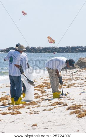 ORANGE BEACH, AL - JUNE 10: BP oil spill workers attempt to remove oil from the seashore of Perdido Pass, AL on June 10, 2010.  Parasails popular in the resort area can be seen in the distance.