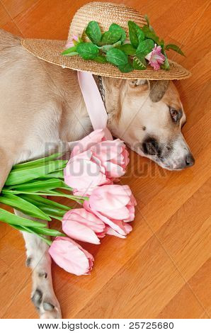Dogs with dressy props