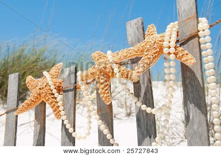 starfish collection on beach fence