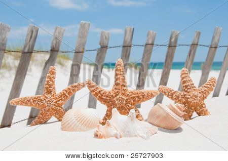 starfish and shell by fence