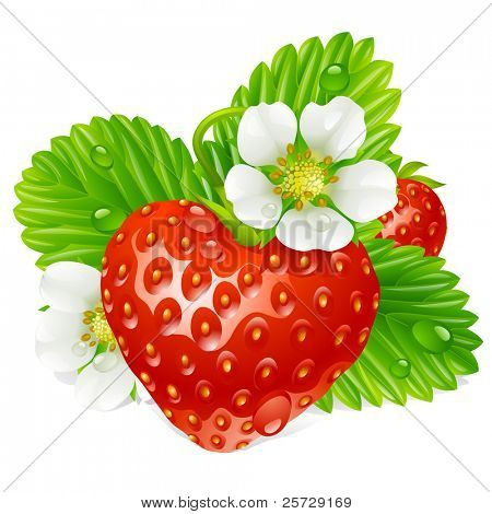 Vector strawberry in the shape of heart and white flowers