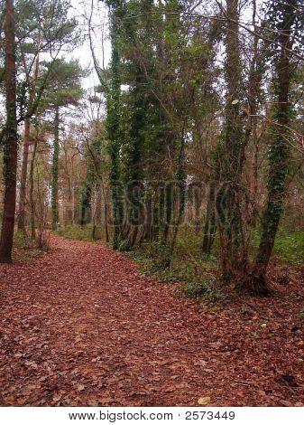 Wald Wand