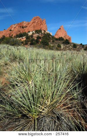 Catus & Garden Of The Gods