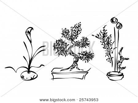 sketch of ikebana and bonsai, vector