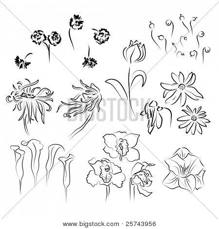 sketch of different flowers, vector