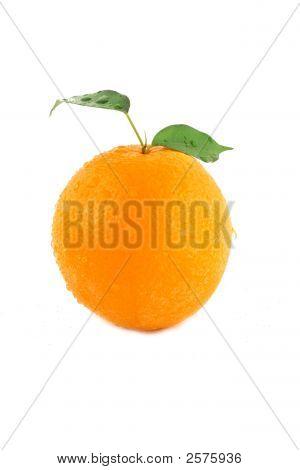 Orange Detail auf weißem Hintergrund