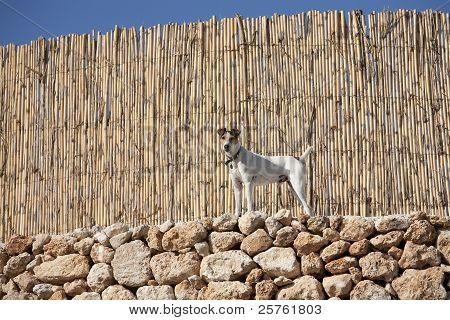 A dog near wooden fence