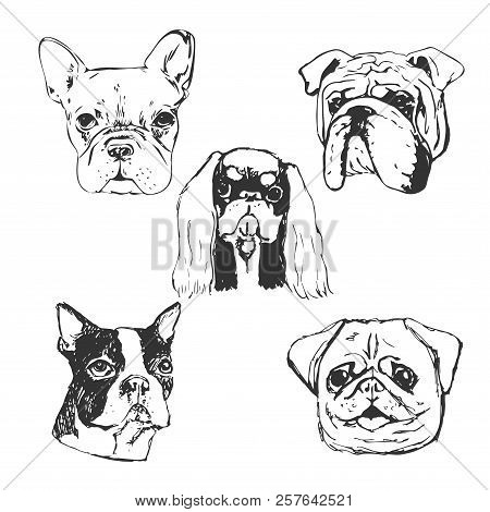 poster of Dog Vector Illustration. Hand Drawn Dog Portraits. Sketch Of Purebred Small Dogs. T-shirt Print Idea
