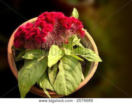 Flower Terra Cotta Pot.