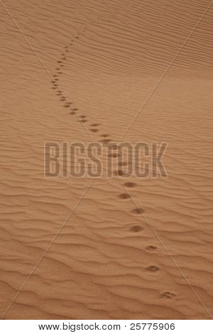 trail on the sand