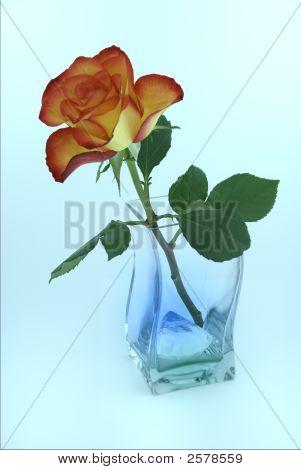 Valentine Rose In Vase With Diamond.