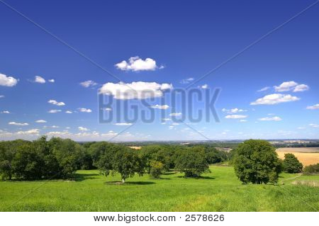Oak Field Landscape