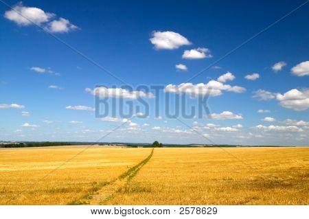 Golden Field Landscape