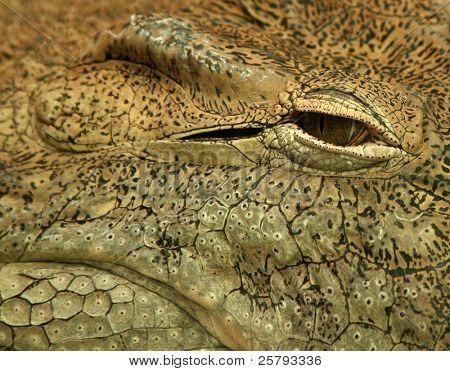 an eye of a crocodile for textures