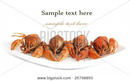 Lobsters on plate close up isolated on white