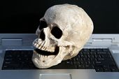 Plastic Resin Human Skull. Halloween Human Skull. Evil Skeleton. Cheap Human Skull for Photo Booth P poster