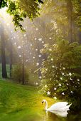 stock photo of pixie  - Beautiful light and golden pixie dust shower on swan - JPG