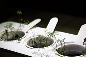 Device For Energy Production By Means Of Plant Growth. Small Plants Grow In The Ground. poster