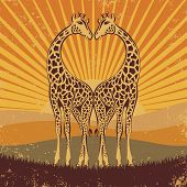 stock photo of paysage  - loving giraffes in retro style - JPG