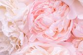 Unfocused Blur Rose Petals, Abstract Romance Background, Pastel And Soft Flower Card poster