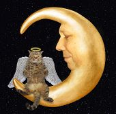 The Cat Angel With A Halo And Wings Is Sitting On The Moon. poster