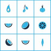 Food Icons Colored Set With Coco, Barberry, Watermelon And Other Garlic Elements. Isolated Vector Il poster