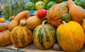 Ripe Pumpkin And Watermelons. Large And Small Ripe Pumpkins. Multicolored Fruit On The Market. poster