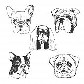 Dog Vector Illustration. Hand Drawn Dog Portraits. Sketch Of Purebred Small Dogs. T-shirt Print Idea poster