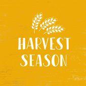 Harvest Season - Hand Drawn Lettering Phrase With Wheat. Harvest Fest Poster Design. Vector Illustra poster