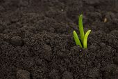 Green Sprout Growing Out From Soil Soil Texture Background. poster