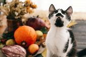 Cute Funny Cat Sitting At Beautiful Pumpkin In Light, Vegetables On Bright Autumn Leaves, Acorns, Nu poster