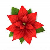Poinsettia Flowers Isolated Icon For Christmas Or New Year Greeting Card Design. Vector Realistic Po poster