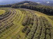Aerial view of apple orchard near Saluda and Asheville, North Carolina. poster