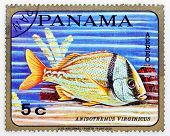 PANAMA - CIRCA 1978: A stamp printed in Panama shows tropical reef fish Anisotremus Virginicus, circ