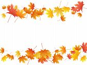 Maple Leaves Vector Background, Autumn Foliage On White Graphic Design. Canadian Symbol Maple Red Ye poster