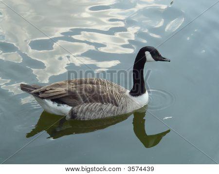 Waterbird