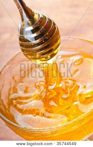 fresh gold honey dipper. macro