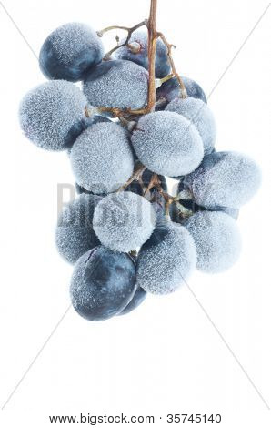Grapes frozen. Isolation on the white