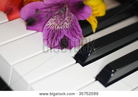 fower on piano