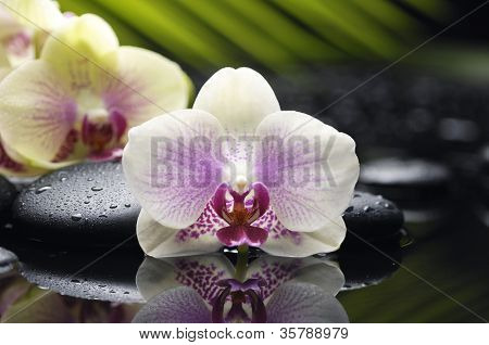 Set of orchid with palm leaf and zen stone