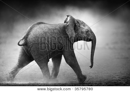 Baby Elephant running in dust (Artistic processing) Etosha National Park