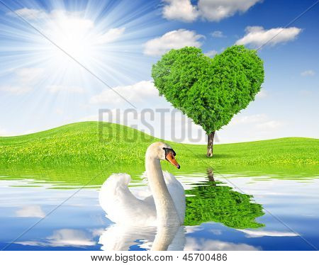 Spring landscape with swan and tree in the shape of heart