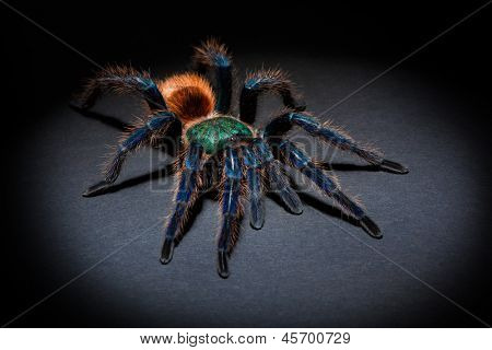Big colorful spider on dark background