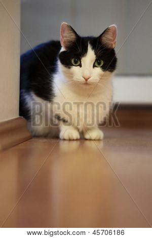 Watchful cat inside a room