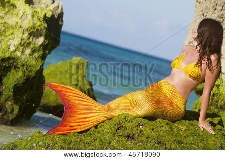 mermaid on tropical sea background