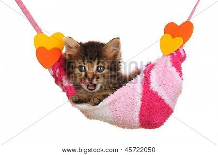 Small kitten lying in hammock isolated on white
