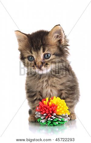 Small kitten play with toy isolated on white