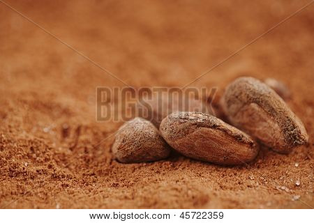 roasted cocoa chocolate beans macro on cocoa powder background