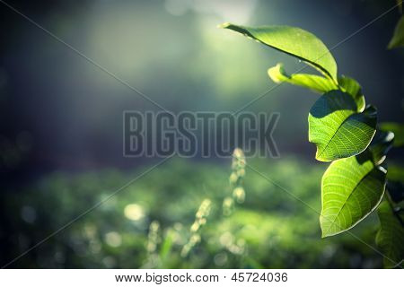 green leaves with sun