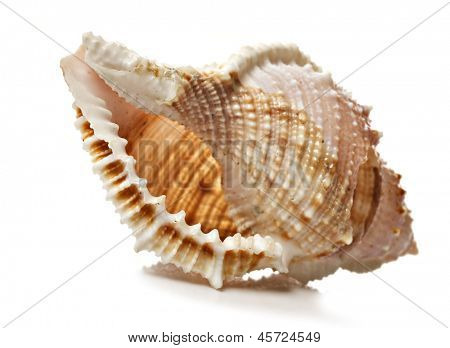 Perfect beautiful sea shell on white background - very shallow depth of field